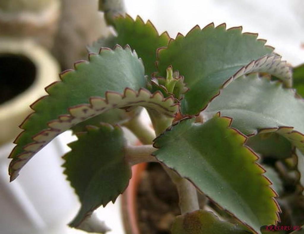 Лечебные домашние цветы и их названия фото